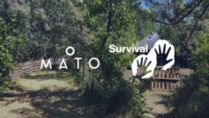 O mato, Charity, Open Air, Survival International, Musik