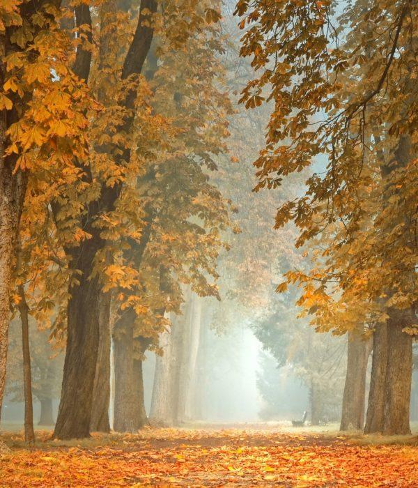 Herbst, Games, Freizeit
