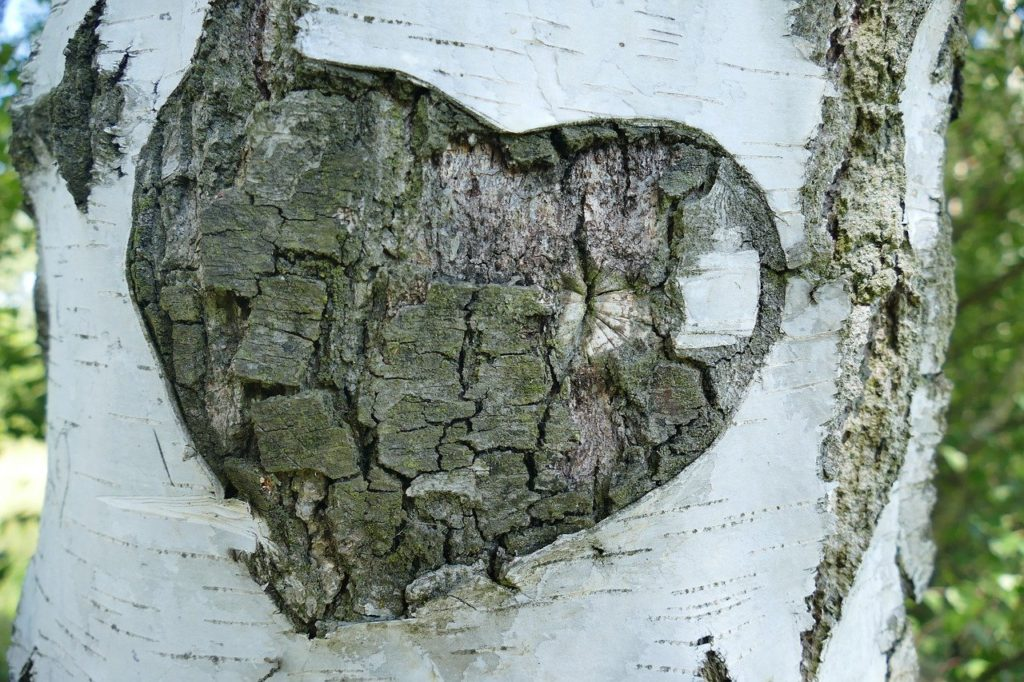 Baum, Gravur, Liebe