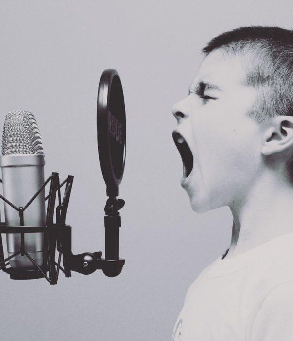 BMG, Künstler, Musik